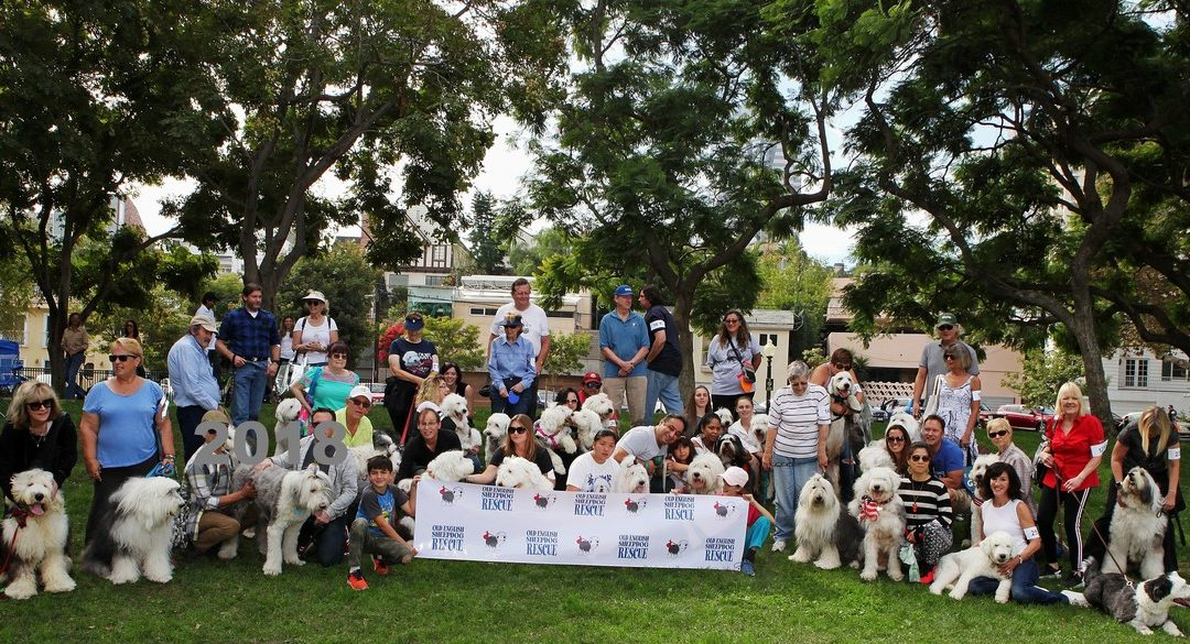 2018: 25th Annual Old English Sheepdog Parade