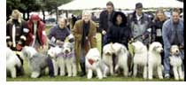 2004: 11th Annual Parade, Burbank Dog Show