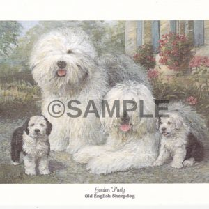 Oeld English sheepdog notecards shipped