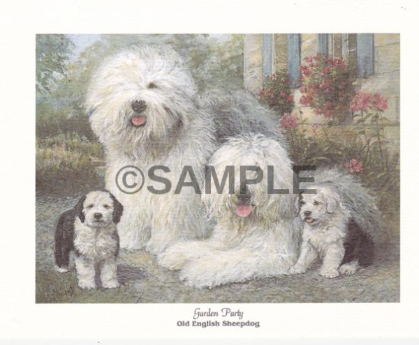 Oeld English sheepdog notecards shipped