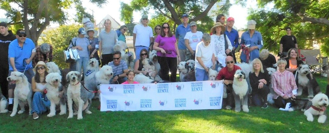 2019: 26th Annual Rescue Parade