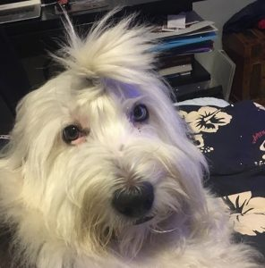 #24 Duncan - Duncan is the best watchdog and loves watching the world from his chair by the window. He listens to Celtic music.