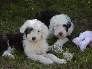 Peggy & Ellie